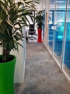 plantes vertes en entreprise avec pot vert