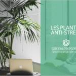 aménagement végétal lyon
